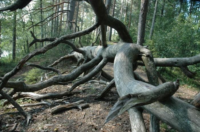 tree-522652_1280